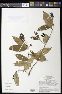 To NMNH Extant Collection (01898976)
