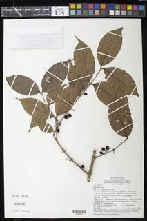 To NMNH Extant Collection (01898977)