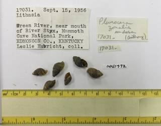 To NMNH Extant Collection (USNM 1441772)