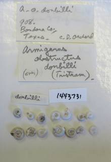 To NMNH Extant Collection (USNM 1443731)