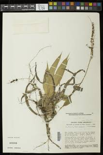To NMNH Extant Collection (01935102)