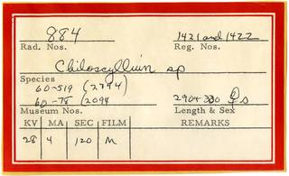 To NMNH Extant Collection (Chiloscyllium RAD110718 Envelope)