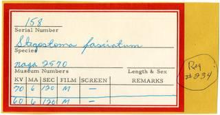 To NMNH Extant Collection (Stegostoma fasciatum RAD110734 Envelope)
