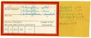 To NMNH Extant Collection (Hemiscylliidae RAD110736 Envelope)