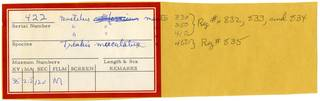 To NMNH Extant Collection (Triakidae RAD110802 Envelope)