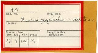 To NMNH Extant Collection (Isurus oxyrinchus RAD110863 Envelope)