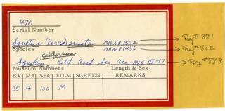 To NMNH Extant Collection (Squatina RAD110879 Envelope)