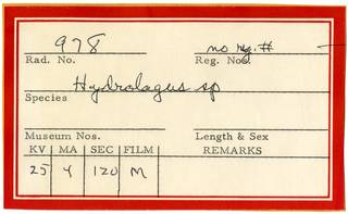 To NMNH Extant Collection (Hydrolagus RAD110913 Envelope)