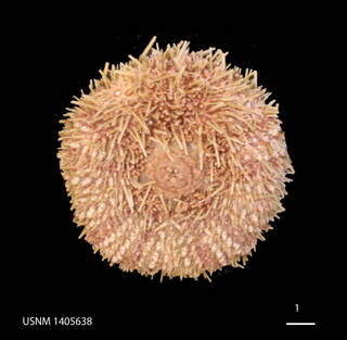 To NMNH Extant Collection (IZ USNM 1405638 (1))