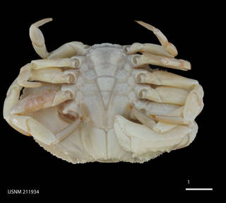 To NMNH Extant Collection (IZ USNM 211934 (2))