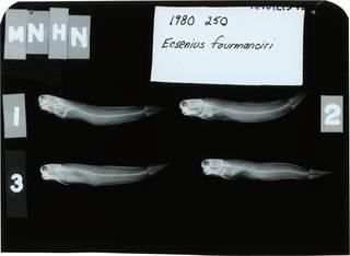 To NMNH Extant Collection (Ecsenius fourmanoiri RAD121545-001)