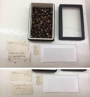 To NMNH Extant Collection (USNM 1454583)