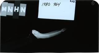 To NMNH Extant Collection (Ecsenius tessera RAD121860-001)