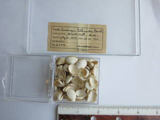 To NMNH Extant Collection (JPEM 06244)