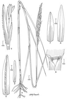 To NMNH Extant Collection (Spartina alterniflora 0939)