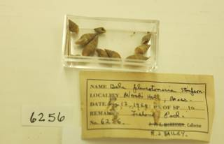 To NMNH Extant Collection (JPEM 06256)