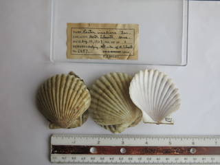 To NMNH Extant Collection (JPEM 06257)