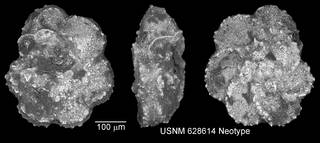 To NMNH Paleobiology Collection (IRN 3148274)
