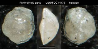 To NMNH Paleobiology Collection (Pulvinulinella parva USNM CC 14479 holotype)