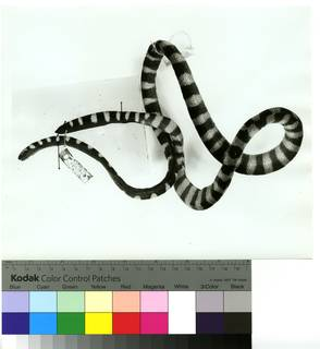To NMNH Extant Collection (USNM 72229 lateral print 001 (AR502680))