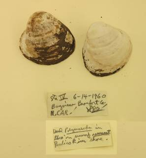 To NMNH Extant Collection (USNM 1479058)
