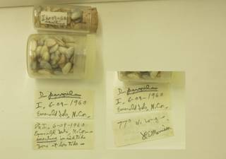 To NMNH Extant Collection (USNM 1479088-1)