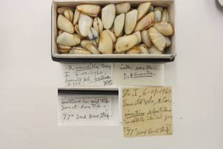 To NMNH Extant Collection (USNM 1479088-2)