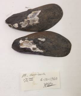 To NMNH Extant Collection (USNM 1481775)