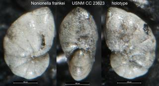 To NMNH Paleobiology Collection (Nonionella frankei USNM CC 23623 holotype)