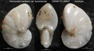 To NMNH Paleobiology Collection (Nonionella hantkeni var. byramensis USNM CC 46947 holotype)