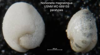 To NMNH Paleobiology Collection (Nonionella magnalingua USNM MO 689155 paratypes)