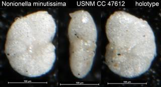 To NMNH Paleobiology Collection (Nonionella minutissima USNM CC 47612 holotype)