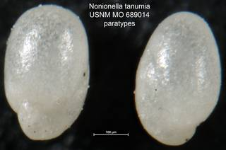 To NMNH Paleobiology Collection (Nonionella tanumia USNM MO 689014 paratypes)