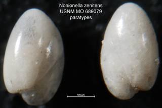 To NMNH Paleobiology Collection (Nonionella zenitens USNM MO 689079 paratypes)