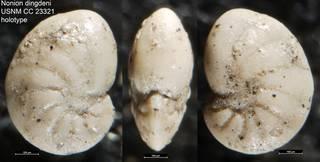 To NMNH Paleobiology Collection (Nonion dingdeni USNM CC 23321 holotype)
