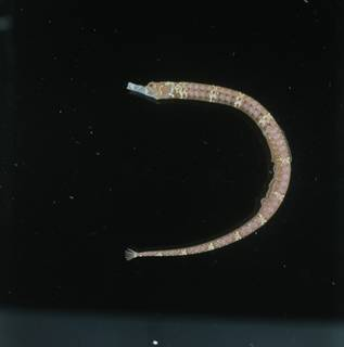 To NMNH Extant Collection (Festucalex FIN034504 Slide 120 mm)