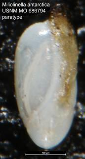 To NMNH Paleobiology Collection (Miliolinella antarctica USNM MO 686794 paratype)