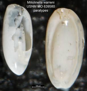 To NMNH Paleobiology Collection (Miliolinella warreni USNM MO 639580 paratypes)