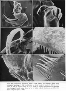 To NMNH Extant Collection (Empoulsenia pentathrix USNM 138651 SEM illustration of dissected anatomy)