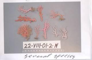 To NMNH Extant Collection (IZ 1015944 Photo)