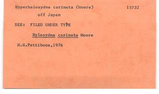 To NMNH Extant Collection (WRM USNM 15732 Hyperhalosydna carinata Card.)