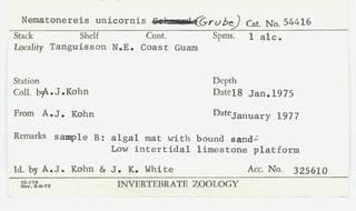 To NMNH Extant Collection (WRM USNM 54416 Nematonereis unicornis Card.)