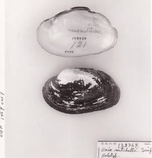 To NMNH Extant Collection (IZ MOL 128364 Interior Exterior)