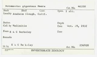 To NMNH Extant Collection (WRM USNM 40350 Notomastus giganteus Card.)