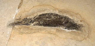 To NMNH Paleobiology Collection (USNM V 22752)