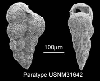 To NMNH Paleobiology Collection (IRN 3142973)