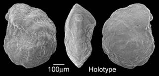 To NMNH Paleobiology Collection (IRN 3153544)