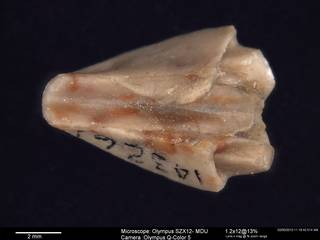 To NMNH Paleobiology Collection (IRN 3138080 1)