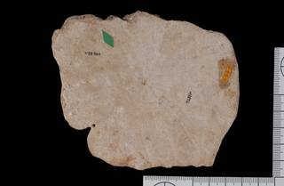 To NMNH Paleobiology Collection (IRN 3137380 2)