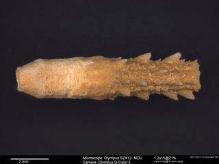 To NMNH Paleobiology Collection (USNM PAL.232503 1)
